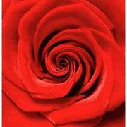 Quadro Decorativo em Canvas 50x50 cm Rosa Vermelha - Jolie