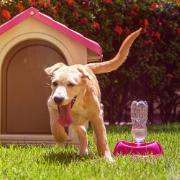 Bebedouro para Cães Automatic Polipropileno 250ml Rosa - Sanremo