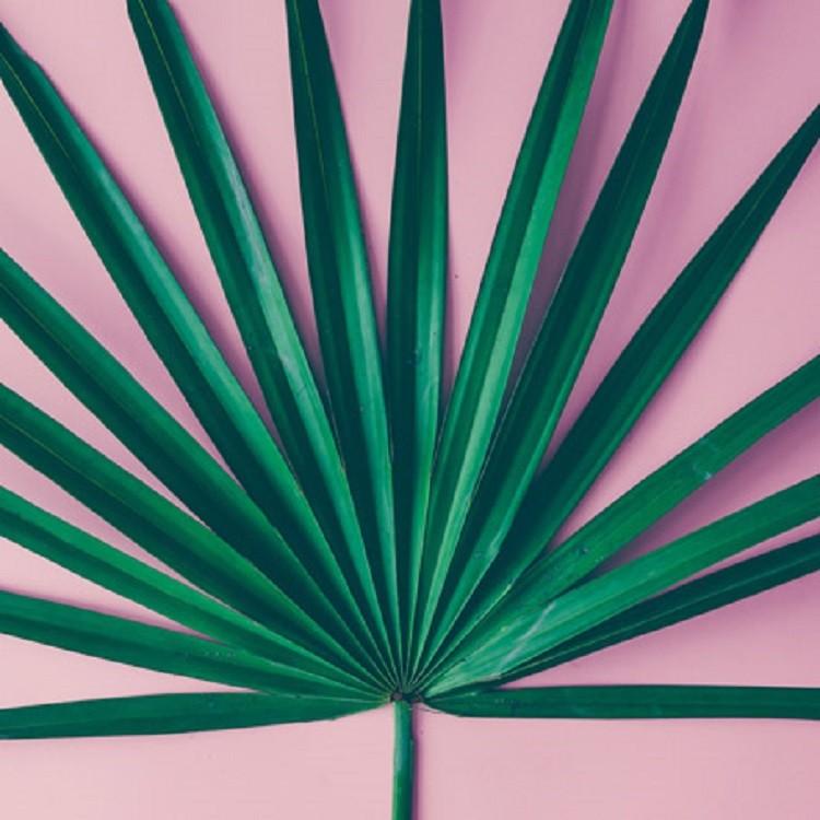 Quadro Decorativo em Canvas 25x25 cm Palmeira - Jolie