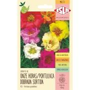 Semente Flor Onze Horas 100mg Envelope 435.23 - Isla