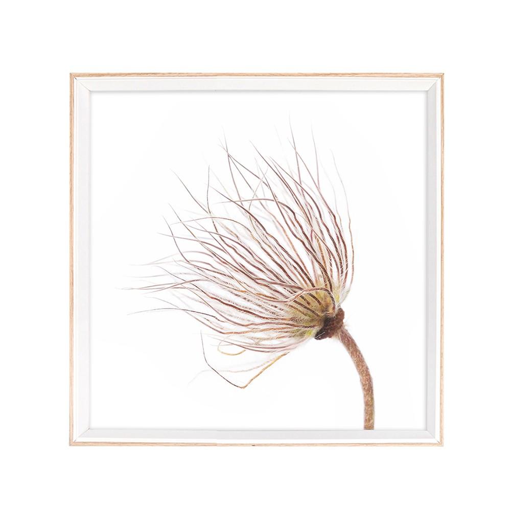 Quadro Decorativo 36x46cm Flor Dente Leao Bege - Jolie
