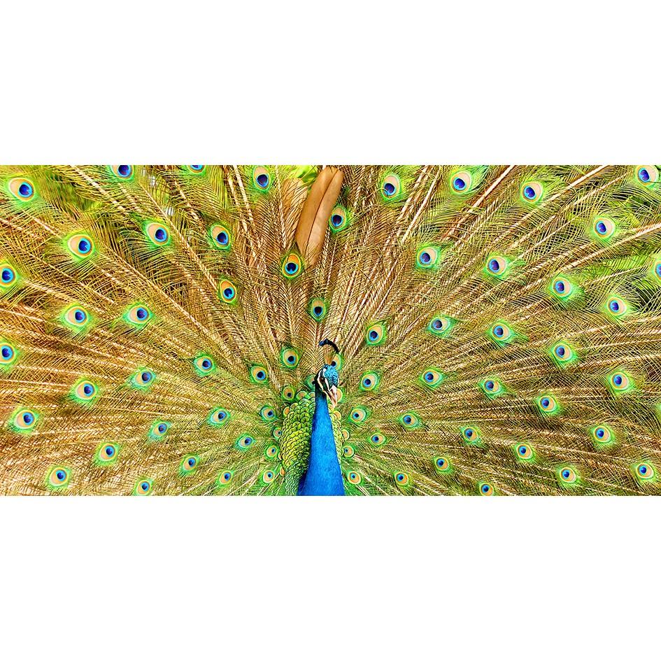 Quadro Decorativo em Canvas 50x100 cm Pavao - Jolie